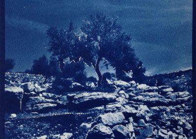 Leena Nammari, Lonely Olive, Cyanotype 20x20cm