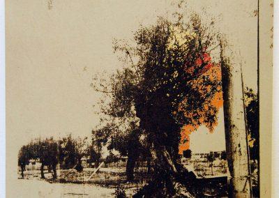 Leena Nammari, The glue that binds – roadside tree